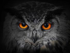 Solomark night vision fernglas infrarot